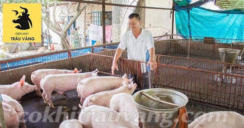 thức ăn chăn nuôi lợn